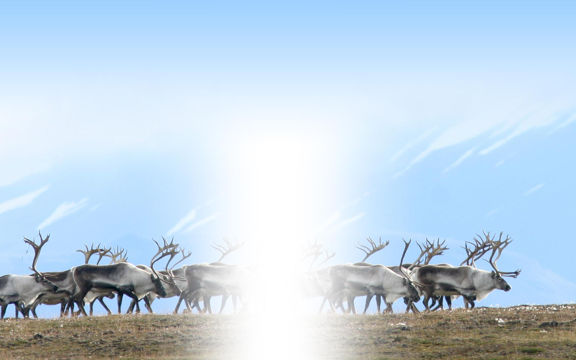 Voice of the Caribou People background